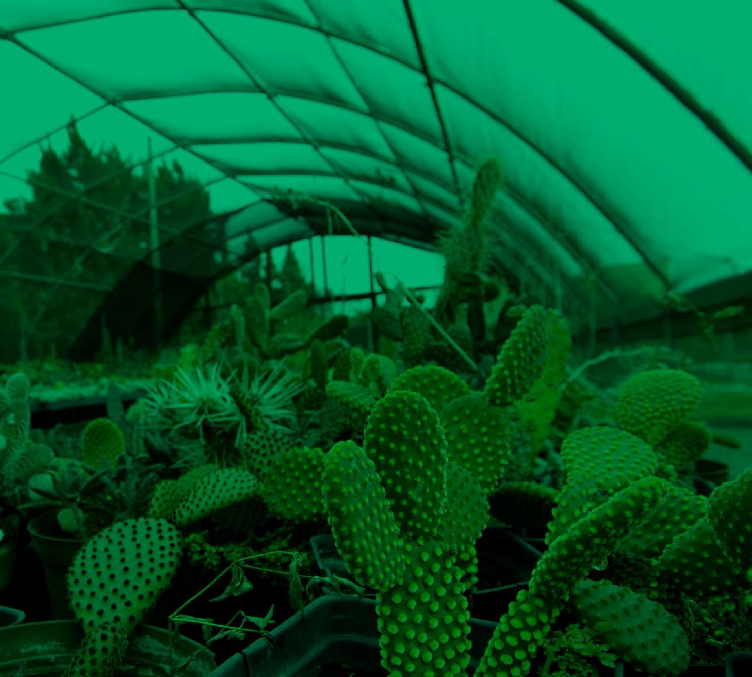 Botánica en el Parque de las Leyendas